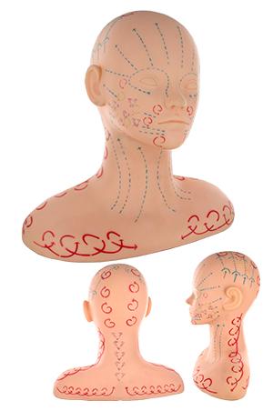 [#M-2051]  Practice Massage Mannequin